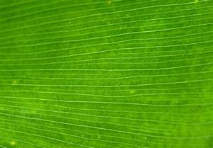 leaf green, texture, photo, background, download, green ...