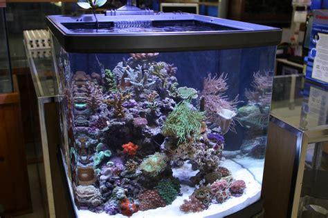 nano marine aquarium setup setting up an aquarium at the office office aquarium aquanerd