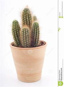 Pot A Cactus : cactus in a pot stock photo image of isolated rural 4559012 ~ Farleysfitness.com Idées de Décoration