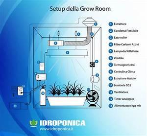 Guida coltivazione indoor, le tre fasi su come coltivare le piante