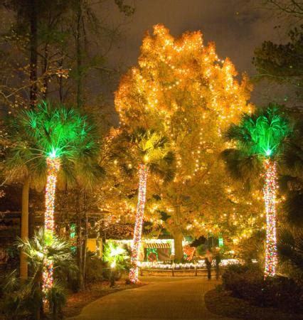 lights before christmas picture of riverbanks zoo and