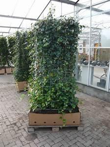 Welche Pflanzen Als Sichtschutz : welche heckenpflanzen sich schmale hecken eignen pressemeldung vom ~ Markanthonyermac.com Haus und Dekorationen