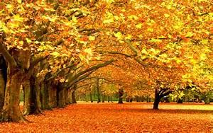 Fall, Leaves, Beautiful, View, Wallpaper, 184207, Wallpapers13, Com