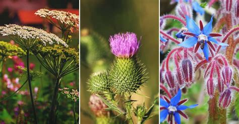 Can You A In Your Backyard by 28 Edible Weeds You Can Find In Your Own Backyard