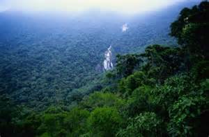 Amazon: Brazil Considers Extending Permits to Enter the Jungle ...