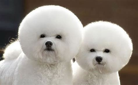 cutest fluffy pets    pet grooming