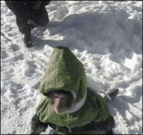 Snowsuit monkey eats snow