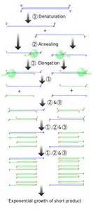Qpcr  U2013 Sybr Green To Measure A Gene
