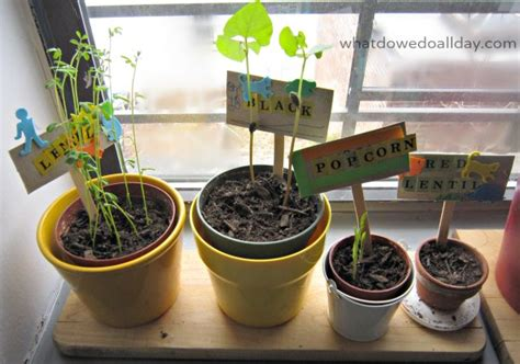 indoor gardening activity kid made plant markers