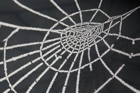 white web  dieffi  deviantart