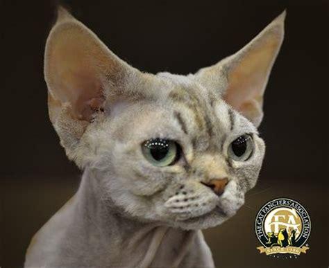 cat fanciers association blog
