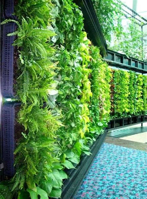 vertical garden home outdoor green living walls