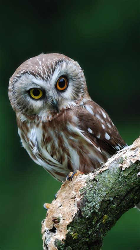 Cute Owl iPhone Wallpapers - WallpaperSafari