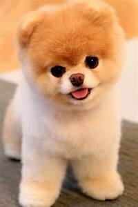Fluffy dog puppy | Cute Animals | Pinterest | Fluffy dogs ...