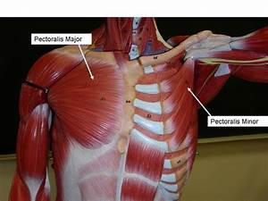 28 Best Images About Anatomy On Pinterest