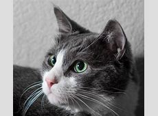 Why Do Cats Have Whiskers? Why Do Cats…? Cats Guide
