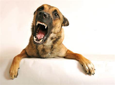 growling dog       van venn