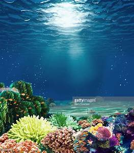 Multicolored Underwater Coral Reef With Sunbeam Stock ...