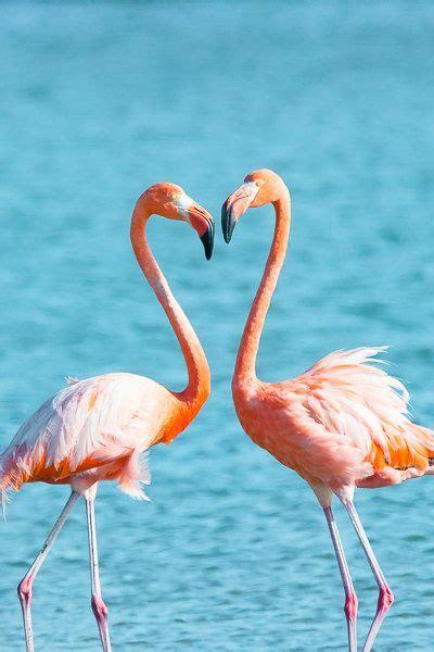 fine art animal photography flamingo  ellieteramotophoto