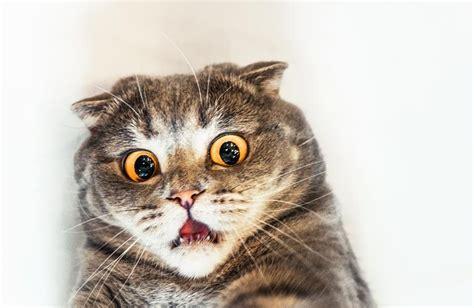 Untuk Menghindari Hamil Bahaya Bulu Kucing Bagi Manusia Menurut Dokter Terpercaya