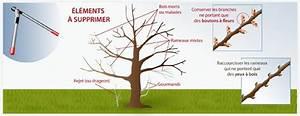 Comment Tailler Un Pommier : tailler un abricotier verger ~ Dode.kayakingforconservation.com Idées de Décoration