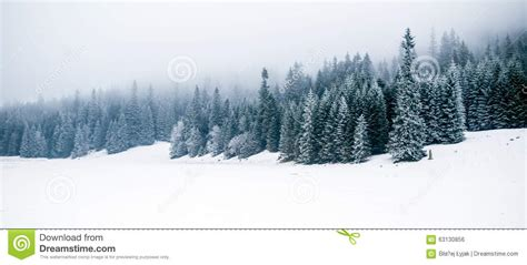 winter white forest  snow christmas background stock