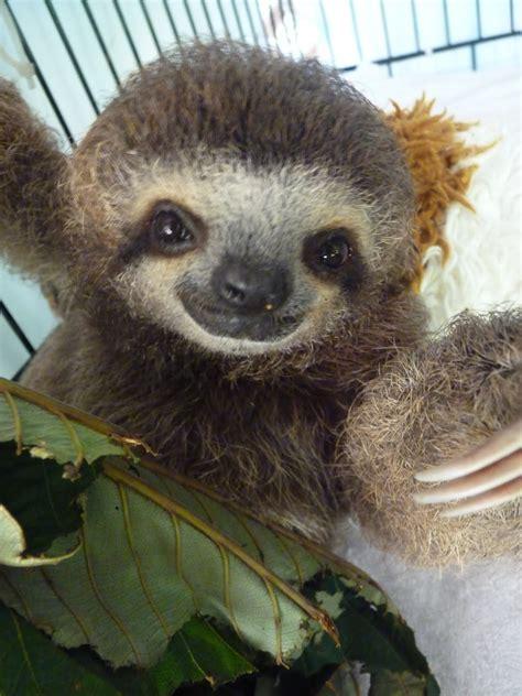 cute sloth wallpaper  wallpapersafari