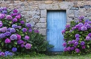 Hortensien Pflege Balkon : hortensien tipps zum pflanzen d ngen und schneiden ~ Lizthompson.info Haus und Dekorationen