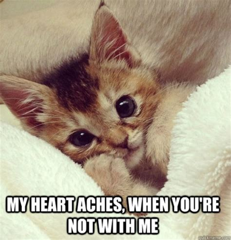 Cute Cats Memes - 101 best cute cat memes that will make your heart melt alley cat