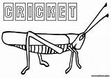 Cricket Coloring Insect Colorings sketch template