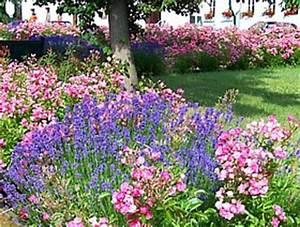 Rosen Und Lavendel : rosen rosenstecklinge rosen selber vermehren ~ Yasmunasinghe.com Haus und Dekorationen