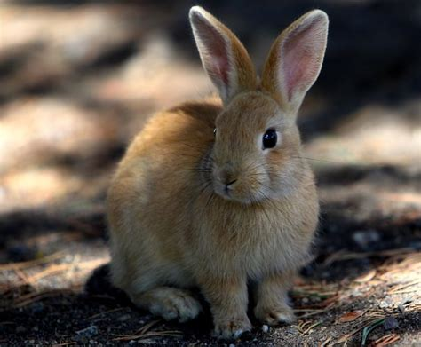rabbit facts animal facts encyclopedia