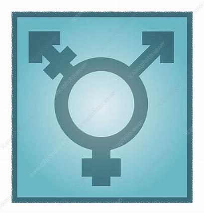 Transgender Symbol Artwork