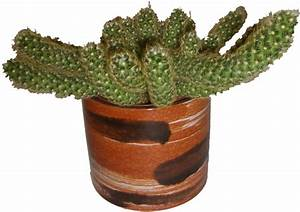 Roth West German Cactus Plant Pot | Pots And Pots