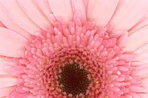 Flower - I LOVE Pink