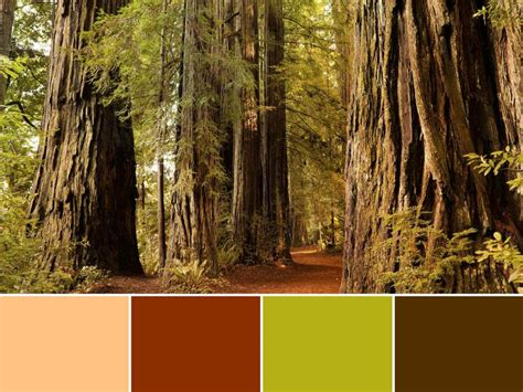 forest color 18 color palettes inspired by national parks hgtv