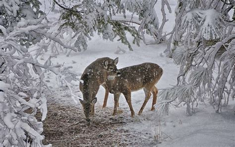 Free Winter Animal Wallpaper - winter animal wallpaper wallpapersafari
