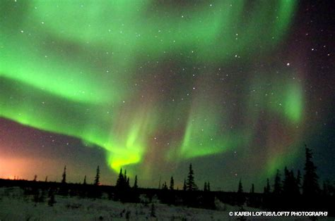 canada northern lights churchill canada where the northern lights delight