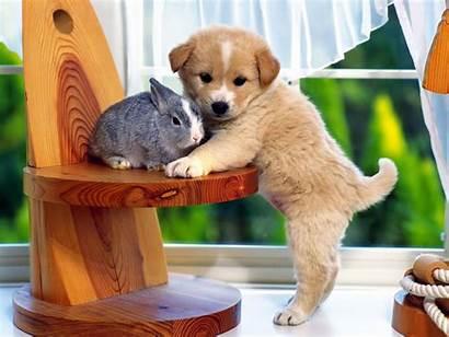 Screensavers Dog Puppy Wallpapers Desktop Screensaver Wallpapersafari