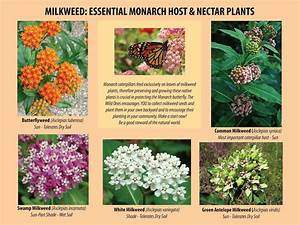 The Ultimate Relay Race  The Monarch Butterfly Story