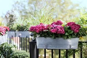 Hortensien Pflege Balkon : w hlen sie die blumen je nach balkonausrichtung welche ~ Lizthompson.info Haus und Dekorationen