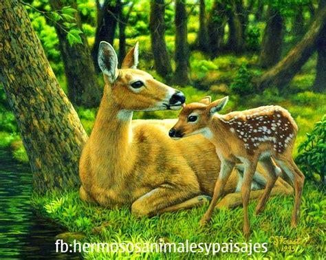 hermosos animales y paisajes agreg 243 una hermosos