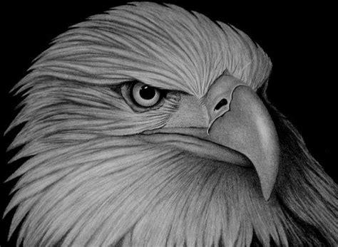 eagle amazing animal drawings  great pencils