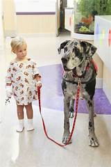 Photos of Service Dogs In Hospitals