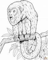 Monkey Coloring Pages Howler Tree Tamarin Printable Realistic Monkeys Golden Lion Emperor Supercoloring Sheet Primate Puzzle Animals Drawings Letter Library sketch template