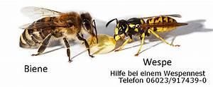 Bienen Und Wespen : unterschied biene wespe ~ Whattoseeinmadrid.com Haus und Dekorationen