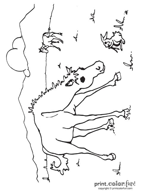 young horse    field coloring page print color fun