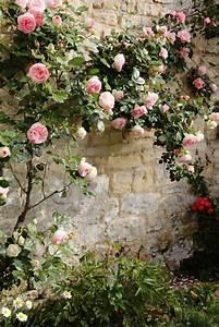 les plantes grimpantes beaucoup d39idees pour le jardin With affiche chambre bébé avec plante fleurie ombre
