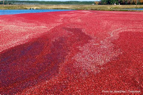 How To Find The Best Cranberry Bog Tours In Cape Cod