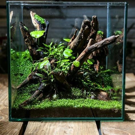 aquascape pets water terrarium terrarium plants